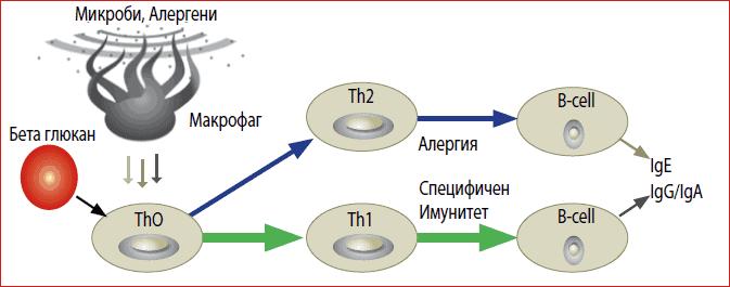 antialergichen-efekt