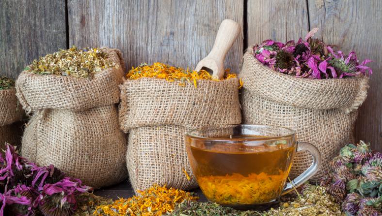Екстрактът от Eхинацея – надеждно средство при настинка и грип