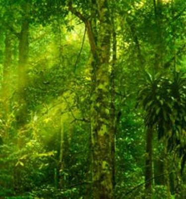 Мачкинa  канџа – древно растение со современа примена