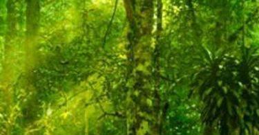 Котешкият нокът – древно растение със съвременно приложение