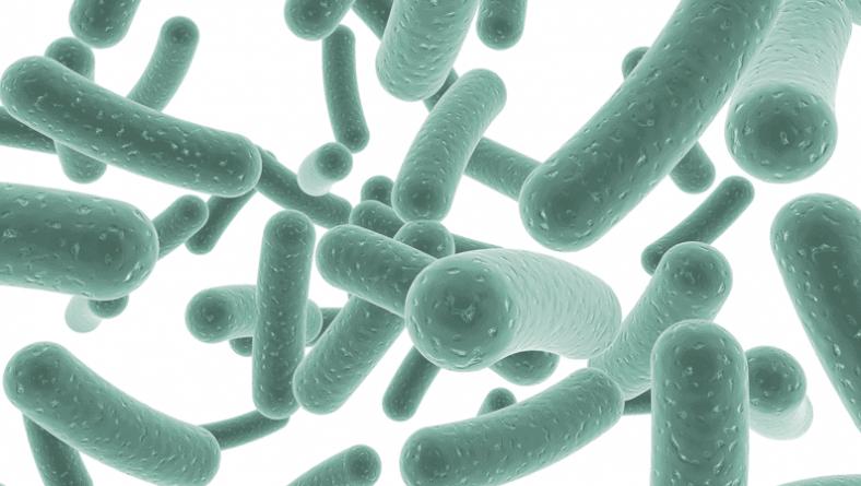Имунобор Биотик съдържа високо микробно число пробиотик и успешно възстановява чревната екосистема