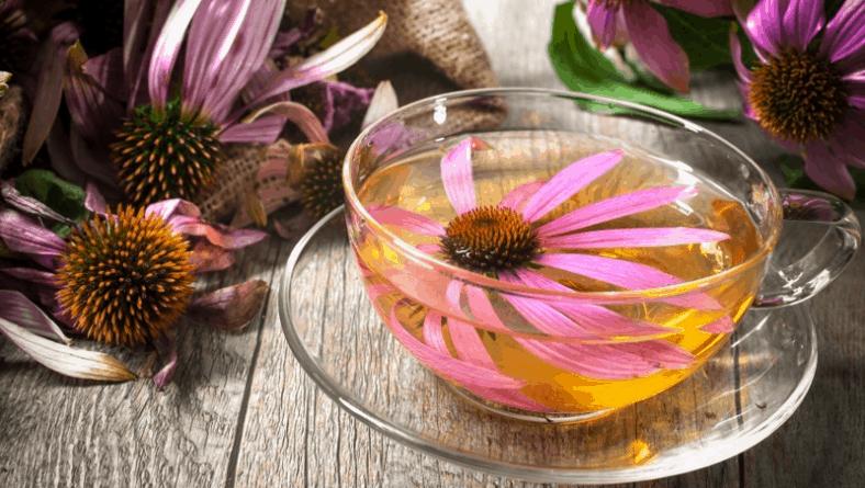 Ехинацея – първи избор при настинка и грип